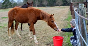 Copiah Rescues Fisher and Chance are beginning to show some trust toward Shelly Riley because the diligent care and love she bestows on them.