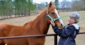 """The first rescued horse, Concho, has had a permanent home with the Rileys for eight years now and is """"spoiled rotten"""" according to Shelly Riley."""