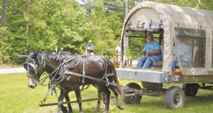The Prentiss Headlight—Wagon driver Ricky Ainsworth set the pace for the equine ride on the Long Leaf Trace with lead mule Jim.
